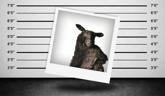 Creative Mess | Tko je Crno Jaje? Tele2, Nova TV ili netko treu0107i?